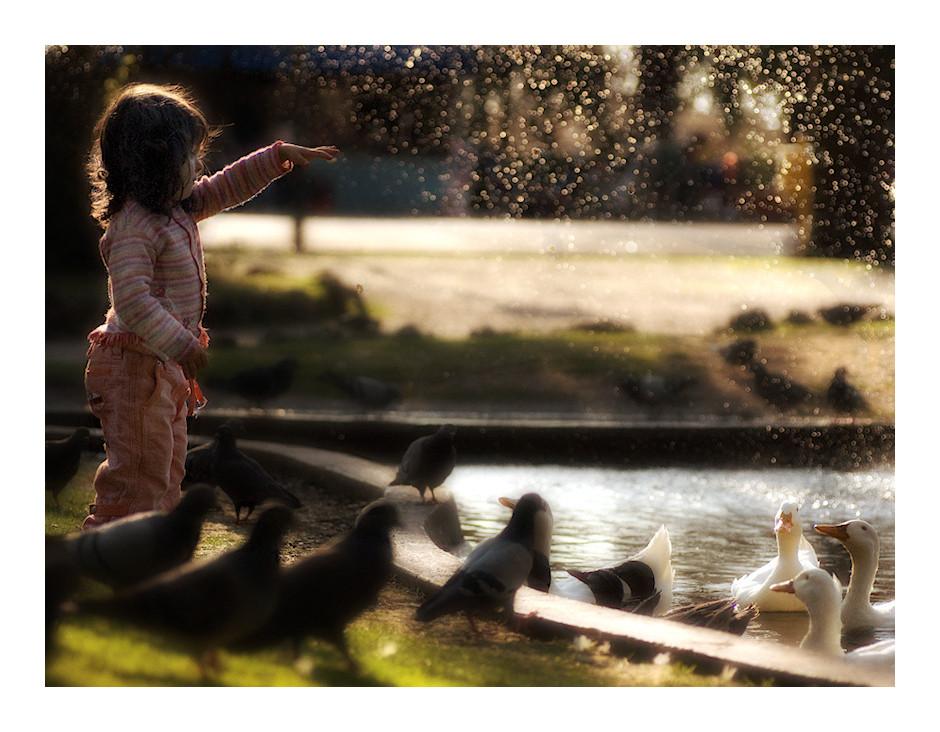 un passerotto tra anatre e piccioni