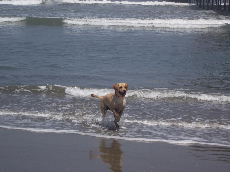 Un perro genial -