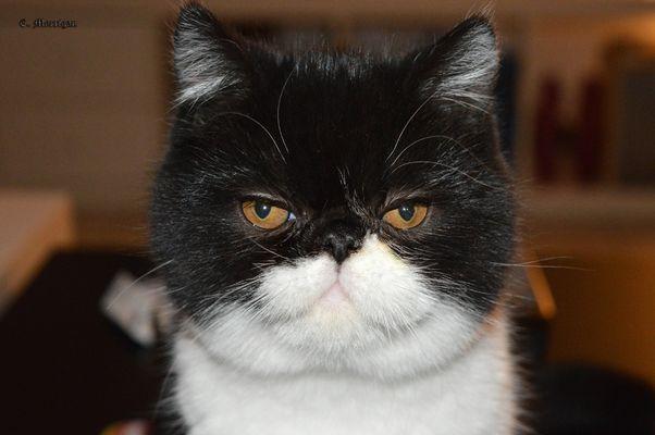 Un petit air de Garfield..