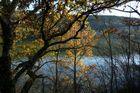 un petit bout de Dordogne en Périgord noir
