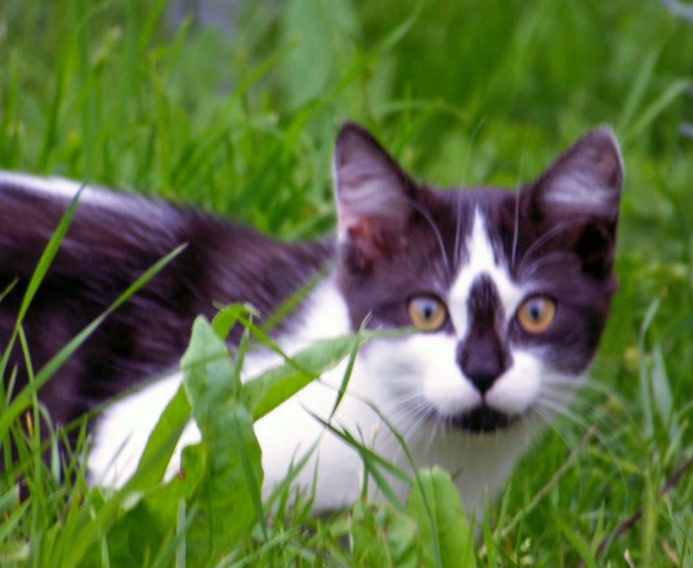un petit chaton qui chercher une betise a faire