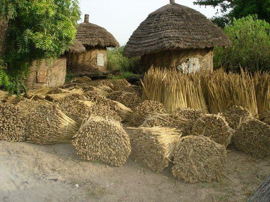 un petit coin tranquille d'afrique typique provision pour l'hiver