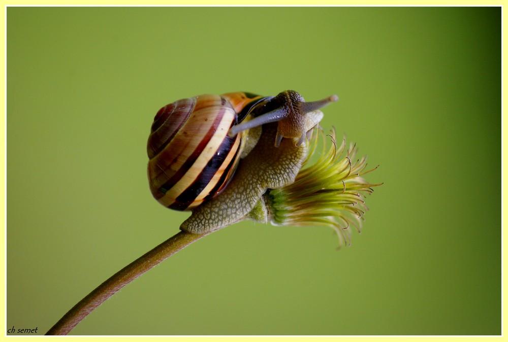 un petit escargot rayé