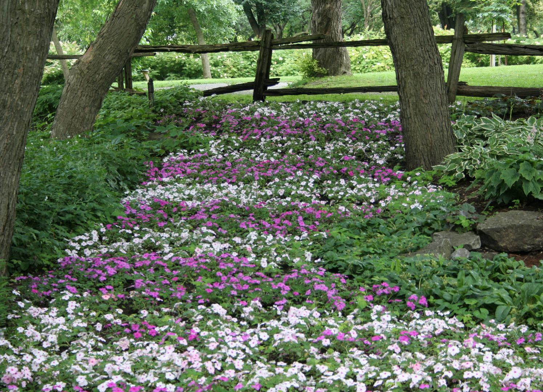 Un petit lit de fleurs