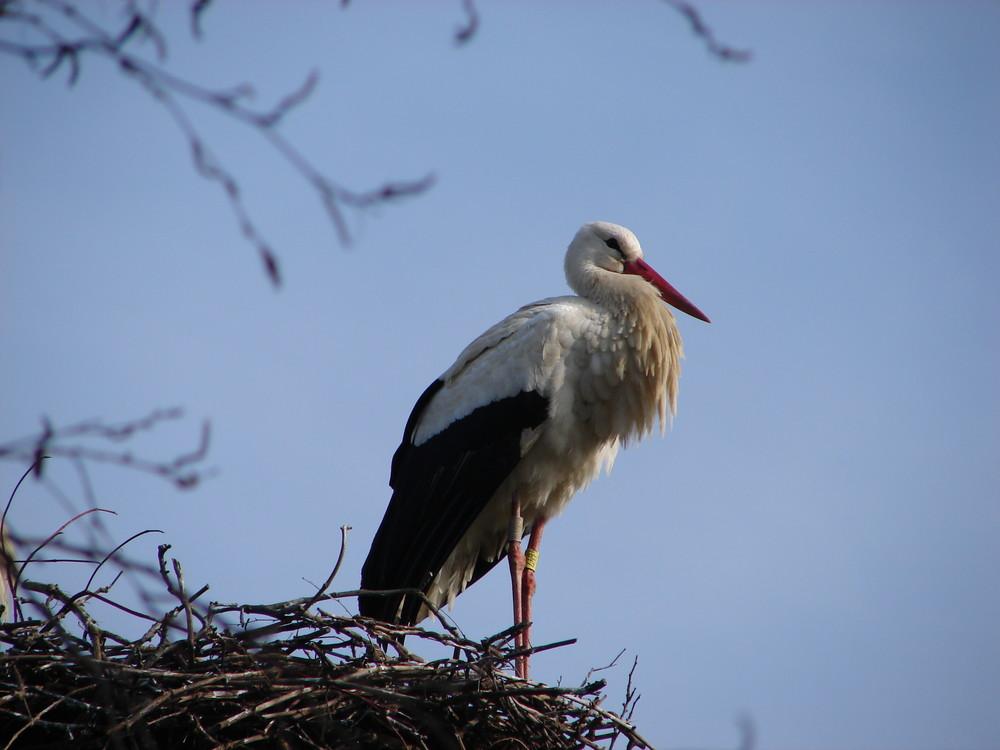 Un petit nid douillet ...