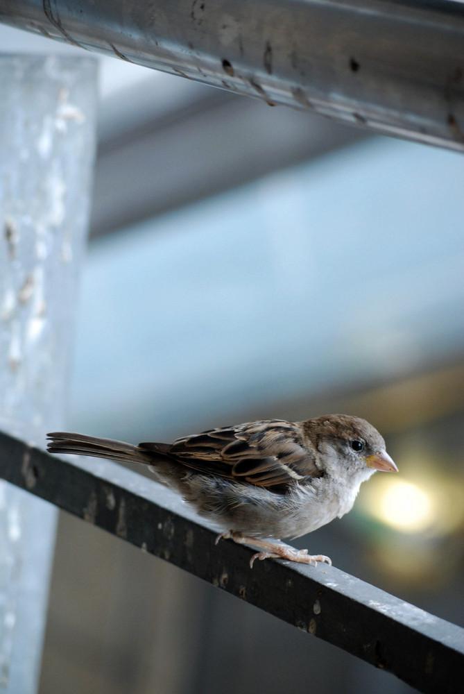 un petit oiseau qui n'a pas peur de moi
