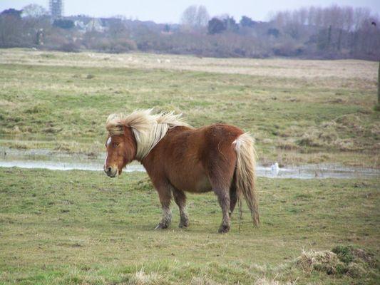 un petit poney au daviaud