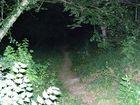 Un petit tour dans les bois................