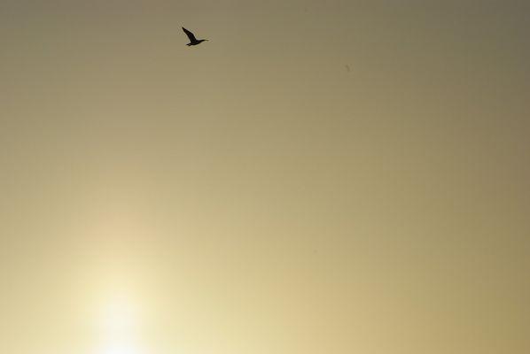 Un petit vol sous la brise du crépuscule ...