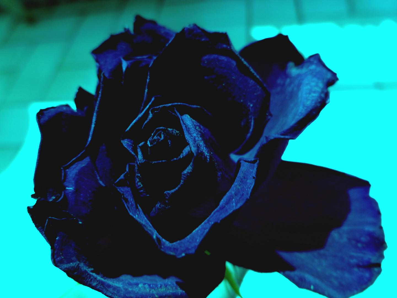 un peu fleur bleue ...