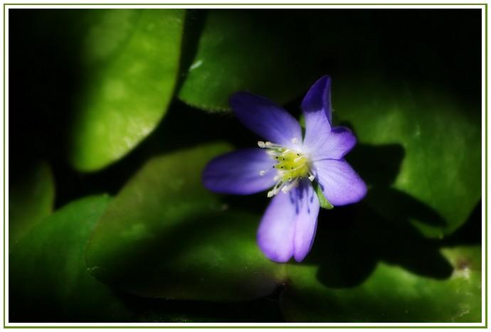 Un Peu Fleur Bleue ?