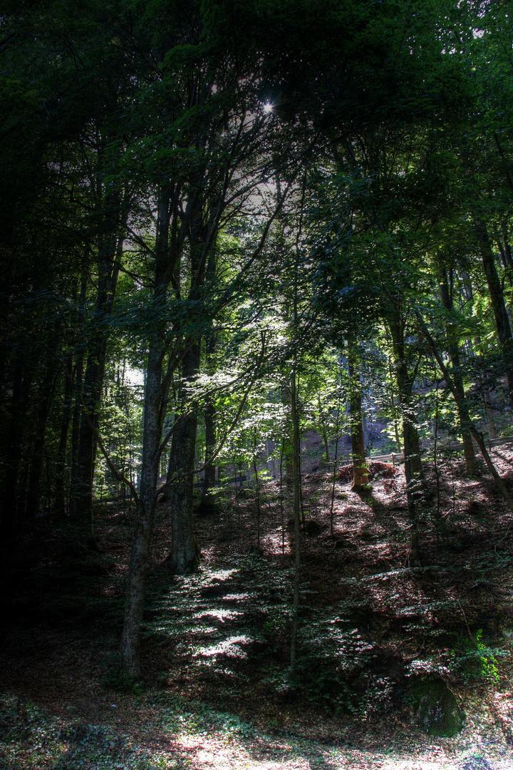 Un pezzo di Monte Amiata