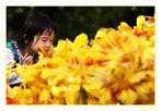 Un piccolo fiore