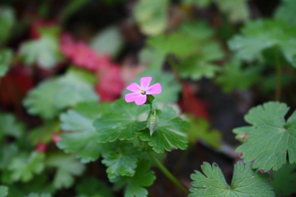 Un piccolo fiore :)