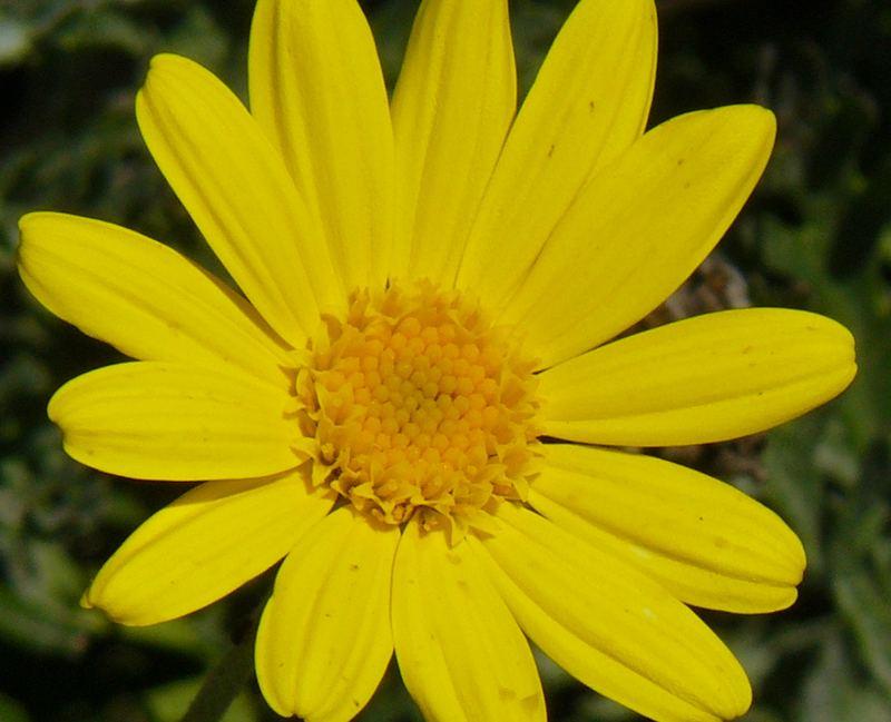 un piccolo giallo