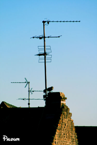 Un pigeon sur le toit d'une maison