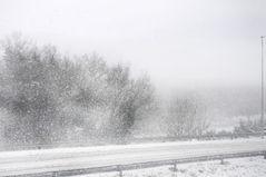 ... un po' di sole, una raggera d'angelo, e poi la nebbia; e gli alberi,..   2