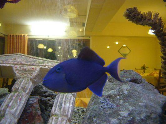 un poisson dans le salon