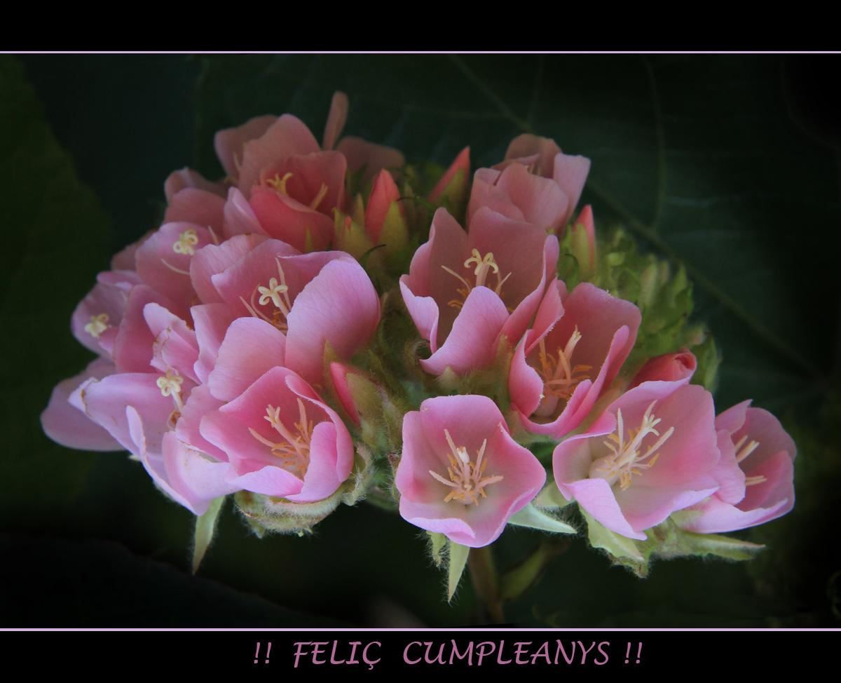 Un Pomet de Flors..per un altre..MªTERESA PASCUAL