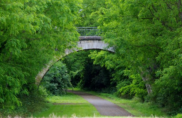 Un pont surgi d'entre les feuilles.