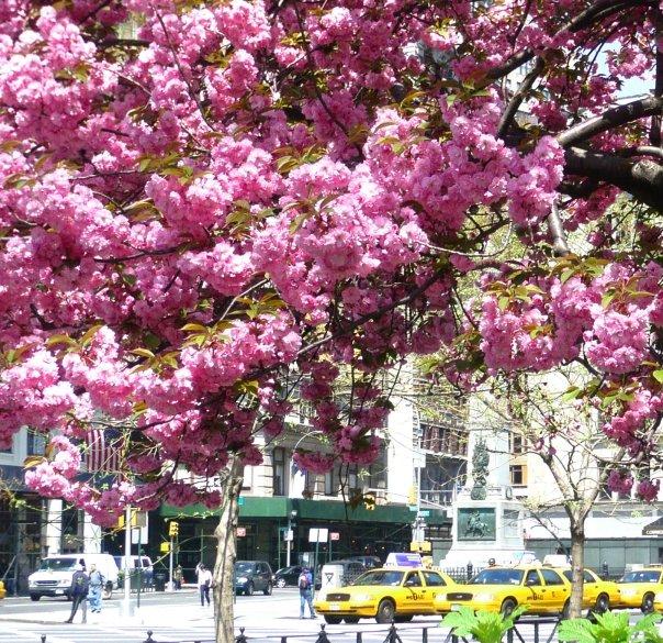 Un printemps à NY