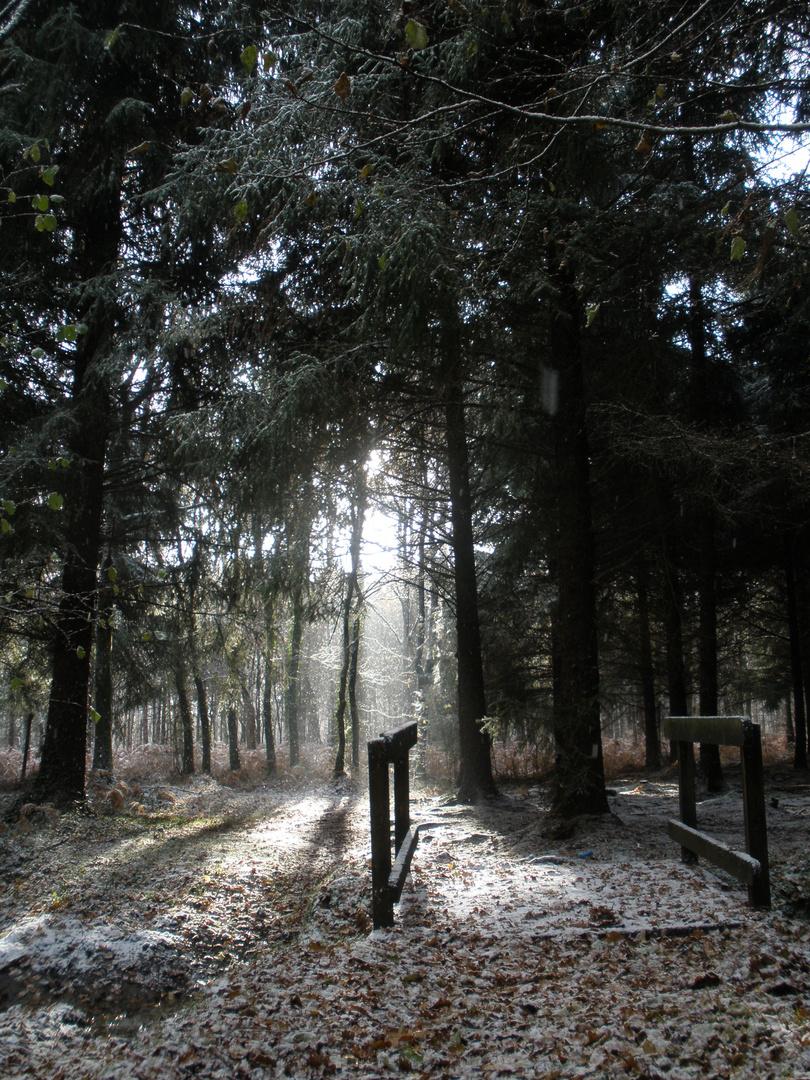 un rare instant le soleil et le neige sont au rendez vous