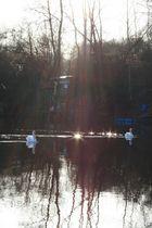 Un rayon de soleil sur le lac