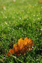 Un retour sur l'automne.