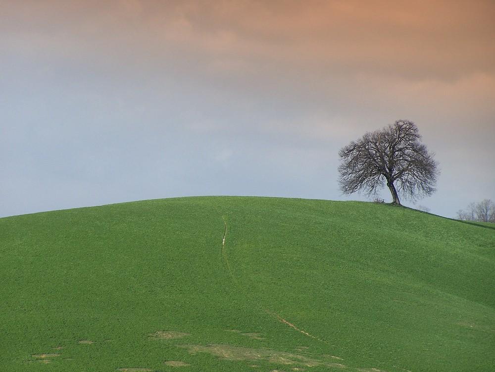 un semplice albero in collina