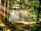 Un soffio di luce nel bosco