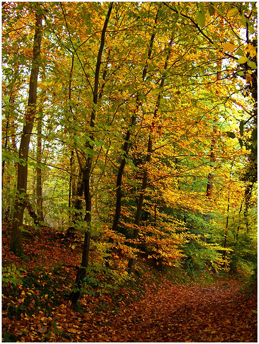 Un soir d'automne...