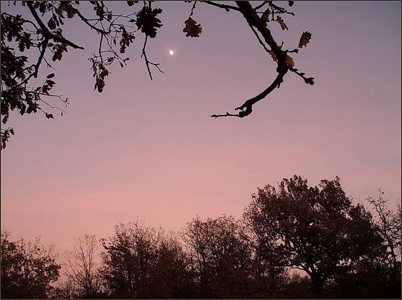 Un soir de novembre