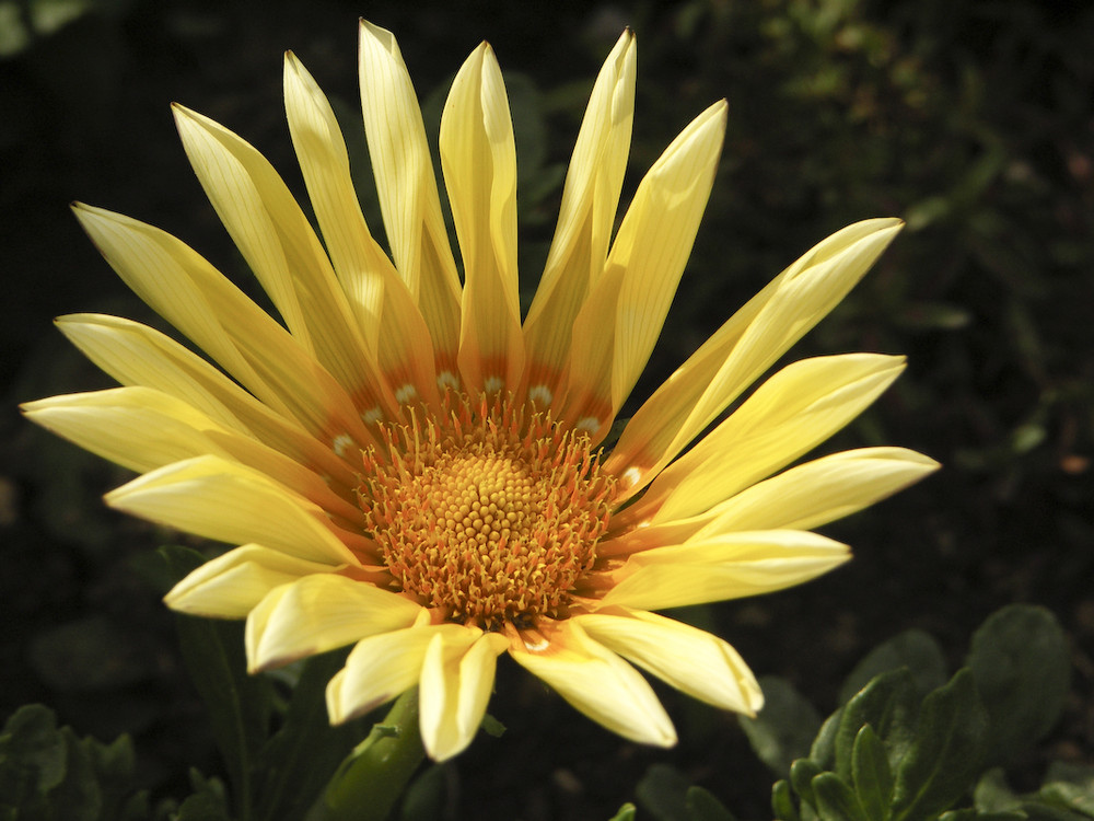 Un soleil parmi les fleurs