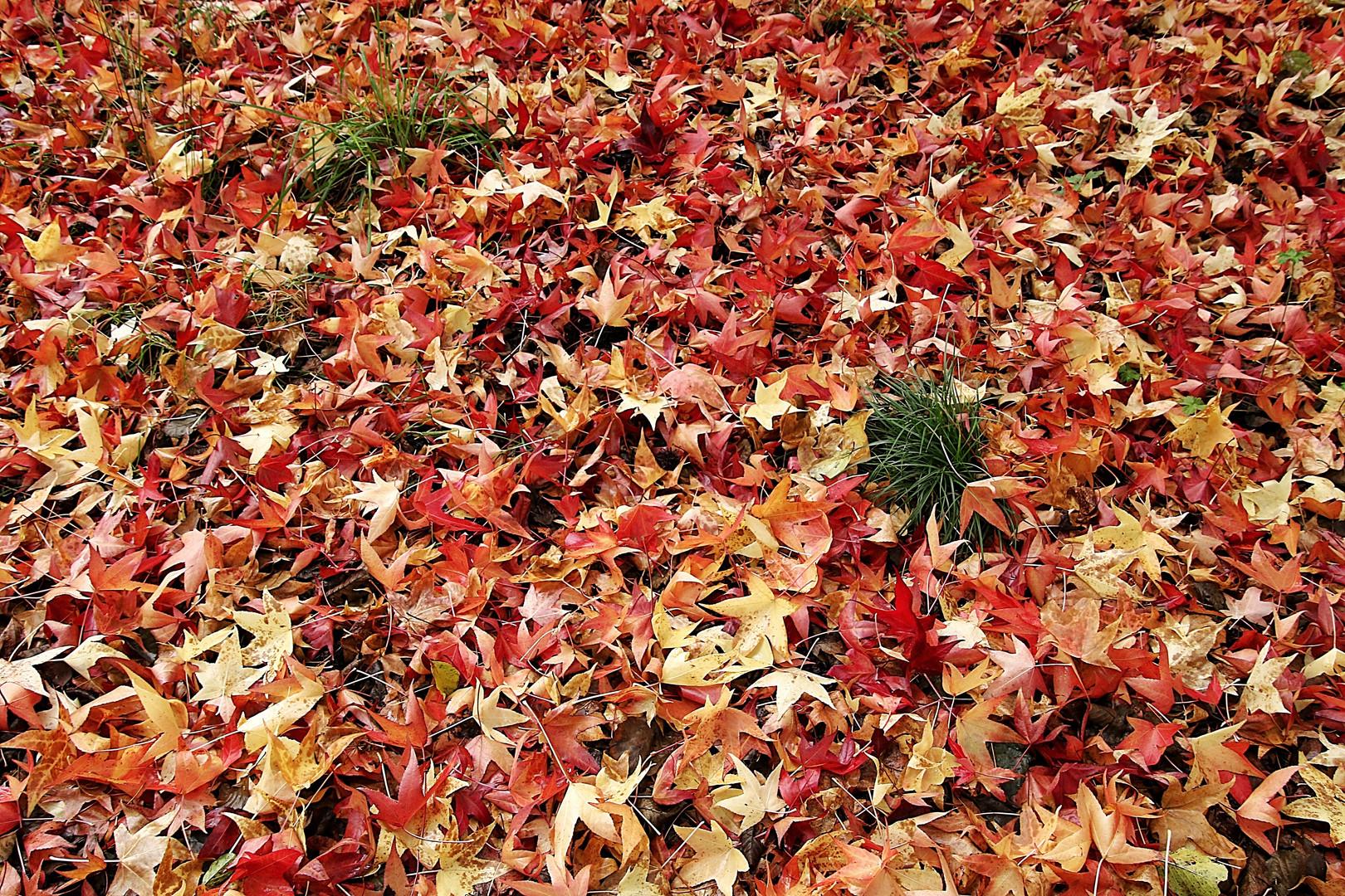 un tapis de feuilles !