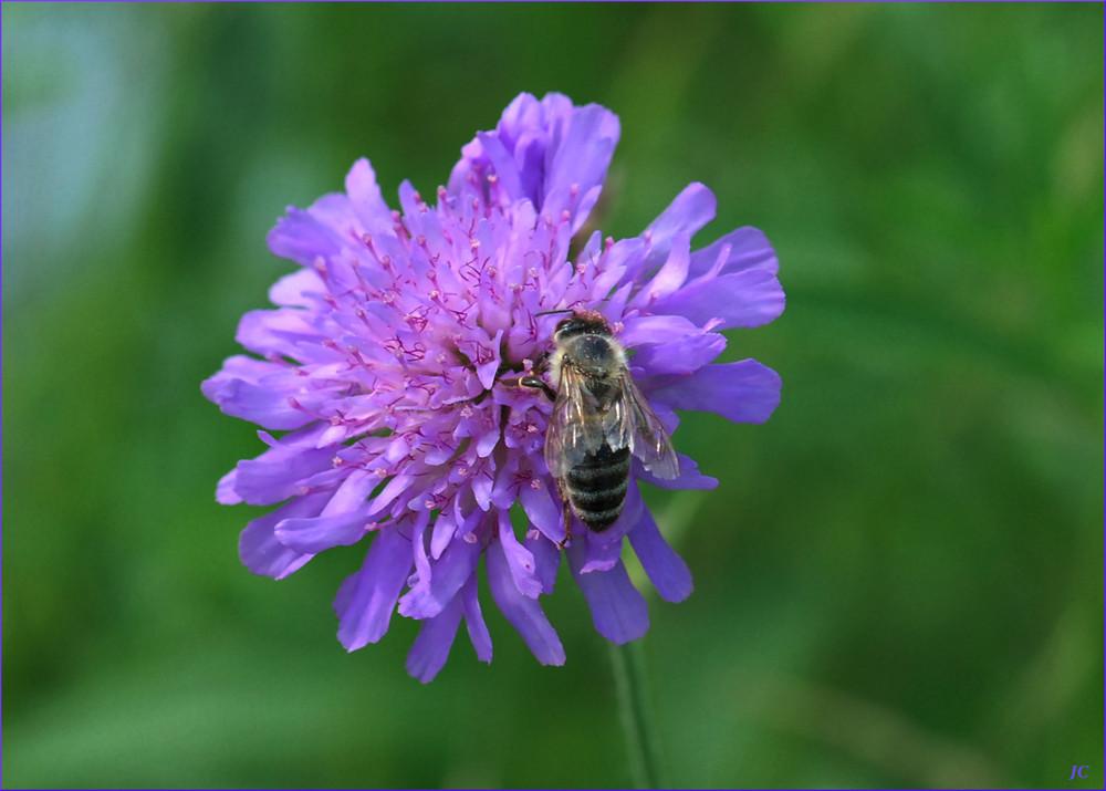 Una abeja golosa