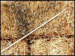 una aguja en un pajar  --
