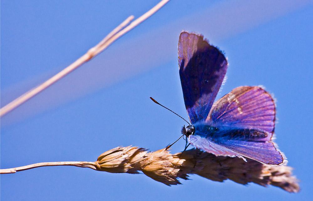 una benedetta farfalla ! ! !