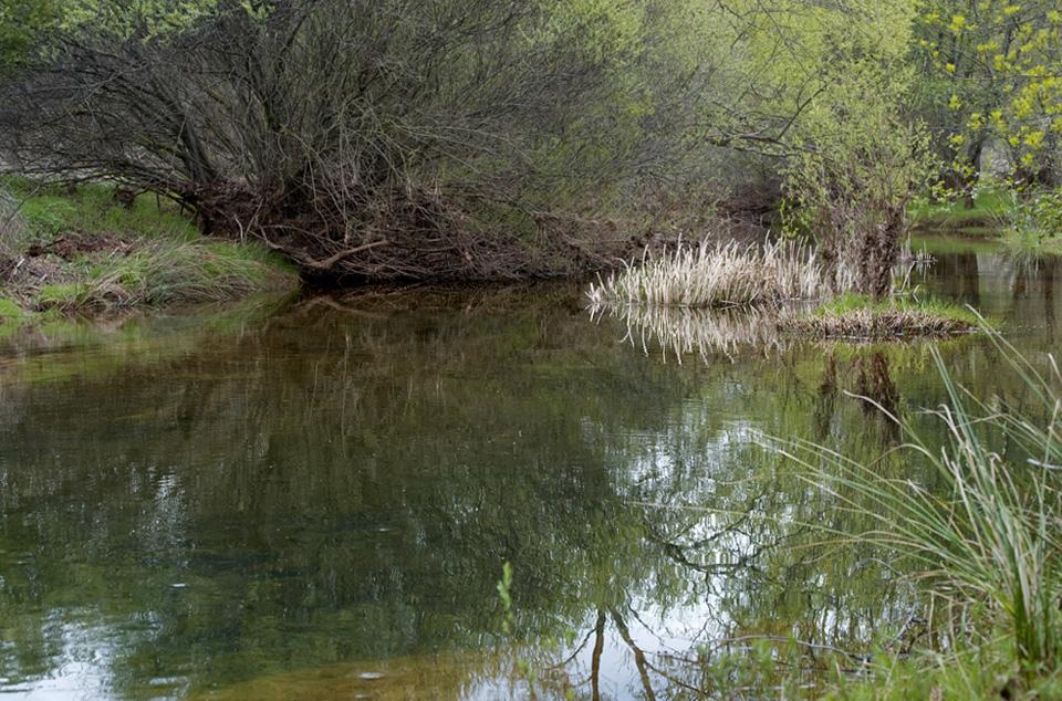 Una charca de un rio cualquiera.