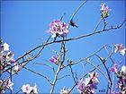 Una colibrí en flor.