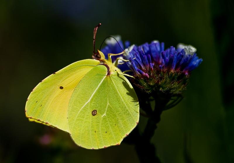 Una . . . farfalla !