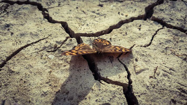 Una farfalla bellissima