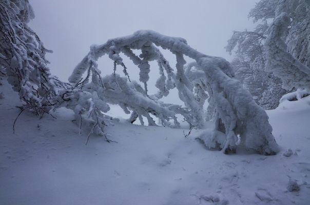 una fiaba di neve