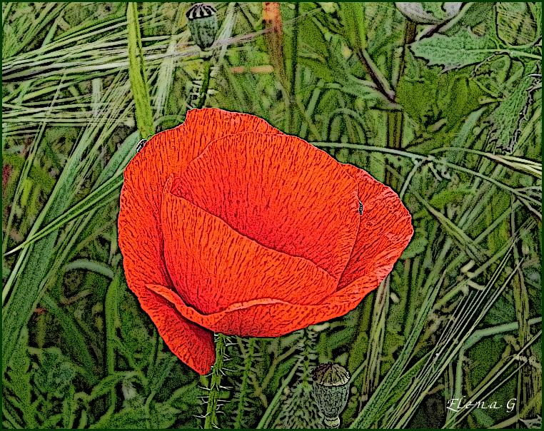 una flor de amapola..de otra manera...