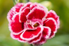 una flor en mi jardin