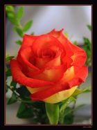 Una flor ilumina la vida