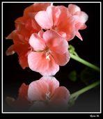 Una flor... (Para Lolita Cecilia)
