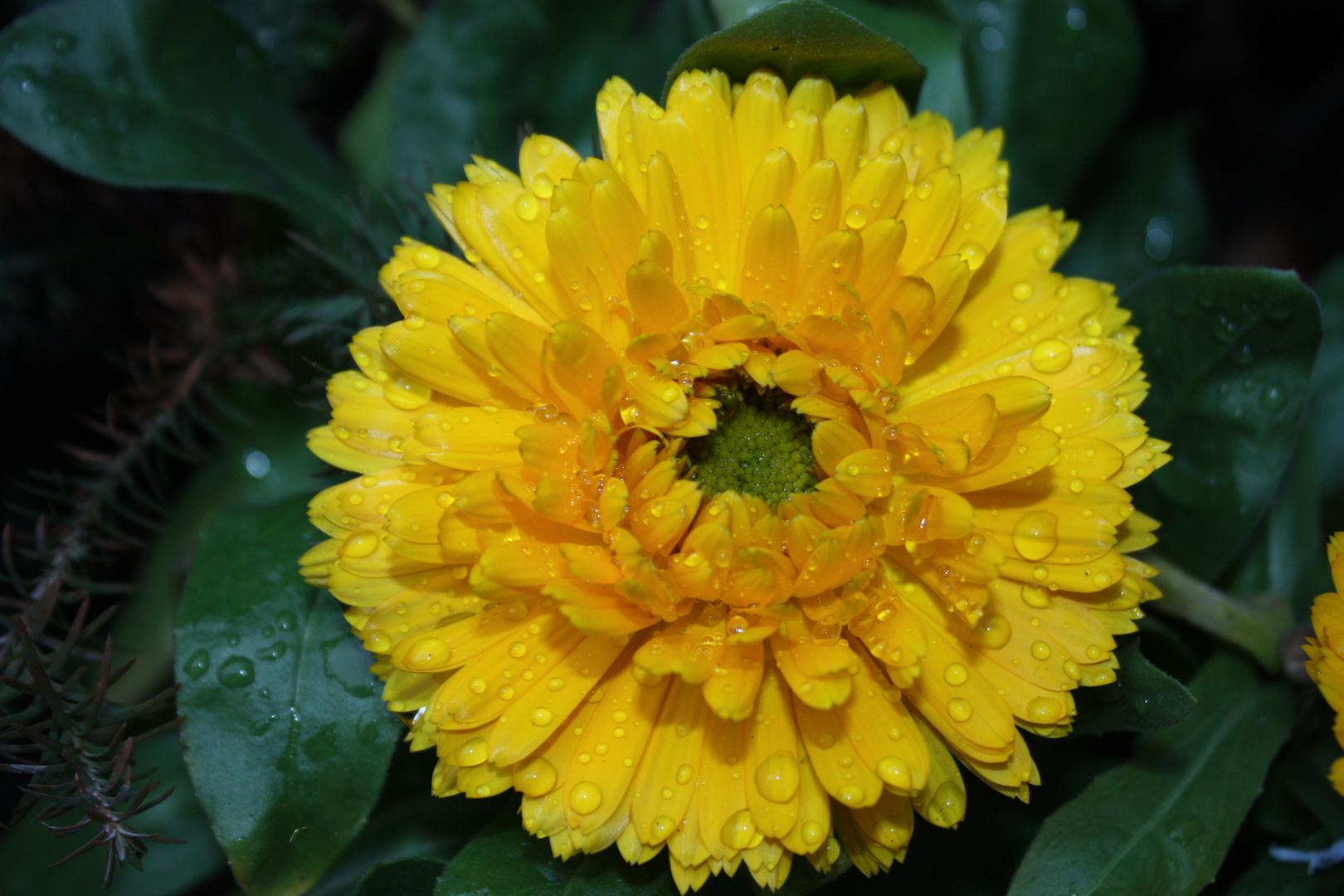 una flor para ti ?