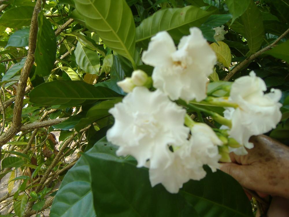 una flor para ti (JAMP)