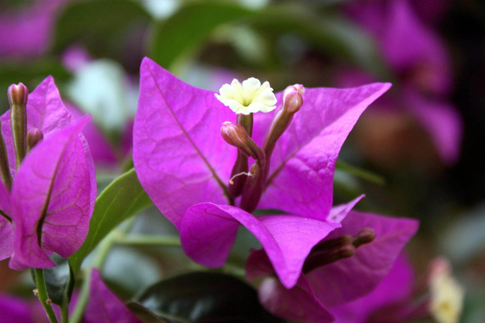 Una flor para una celebración