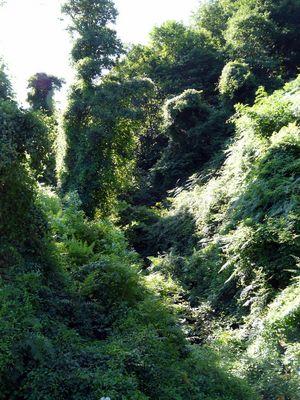 Una foresta ...italiana